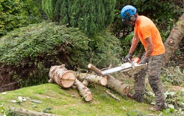 additional services offered by Brecon tree surgeons