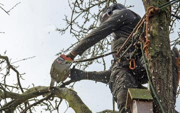 the process of removing dead wood from Brecon trees