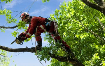 find trusted rated Brecon tree surgeons in Powys