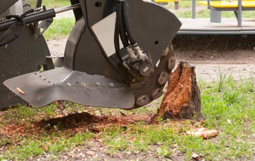 professional Brecon stump grinding services