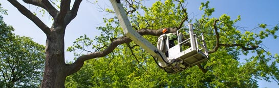 Brecon tree surgery services