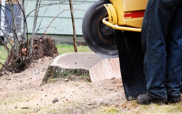 rated Brecon tree stump removal companies