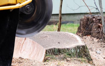 tree stump grinding Brecon, Powys