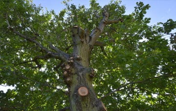 what is Brecon tree surgery?