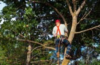 Brecon tree crown reduction services