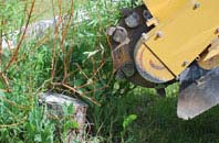 free Brecon tree stump grinding quotes