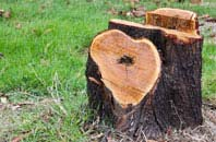 free Brecon tree stump removal quotes