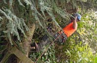 free Brecon tree surgery quotes